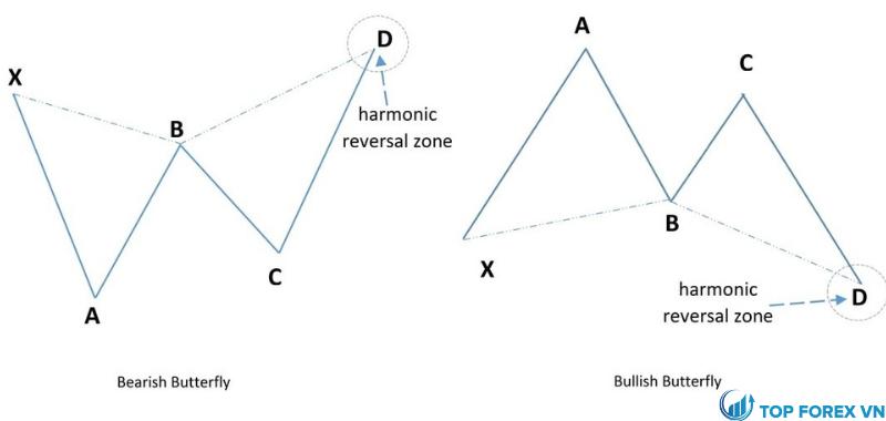 Mô hình cánh bướm Harmonic